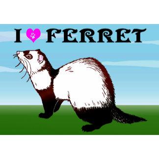 Ferret (6)