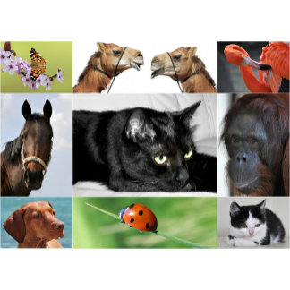 ♡ animals
