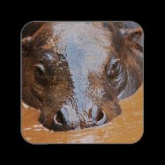 * Hippos