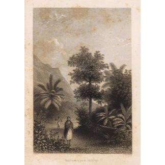 Broom Road, Tahiti