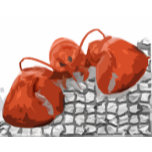 lobster on rock 2.jpg