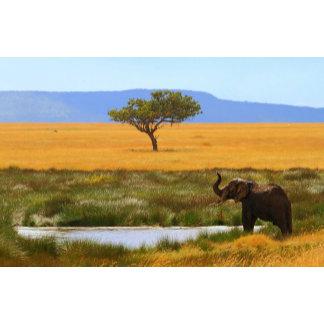 African Elephant in Seronera Valley