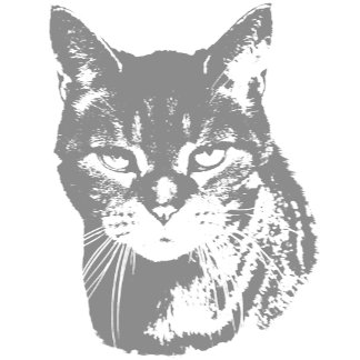 Gray Tom Cats Stare