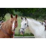 horses-79553.jpg