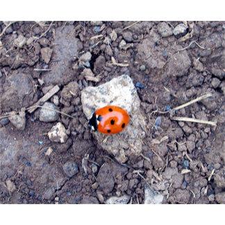 Rock Climber Ladybug