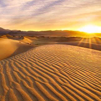 Rippled Sand Dunes at Sunrise