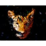 a tiger.jpg