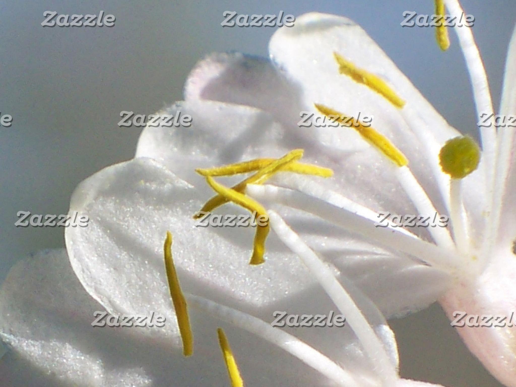 Honeysuckle Flower.jpg