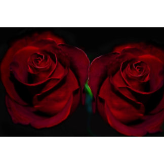 Roses Of Love