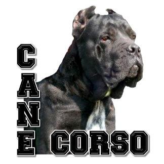 Cane Corso 2