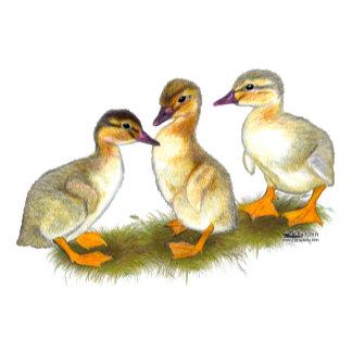 Ducklings:  Buff Orpingtons