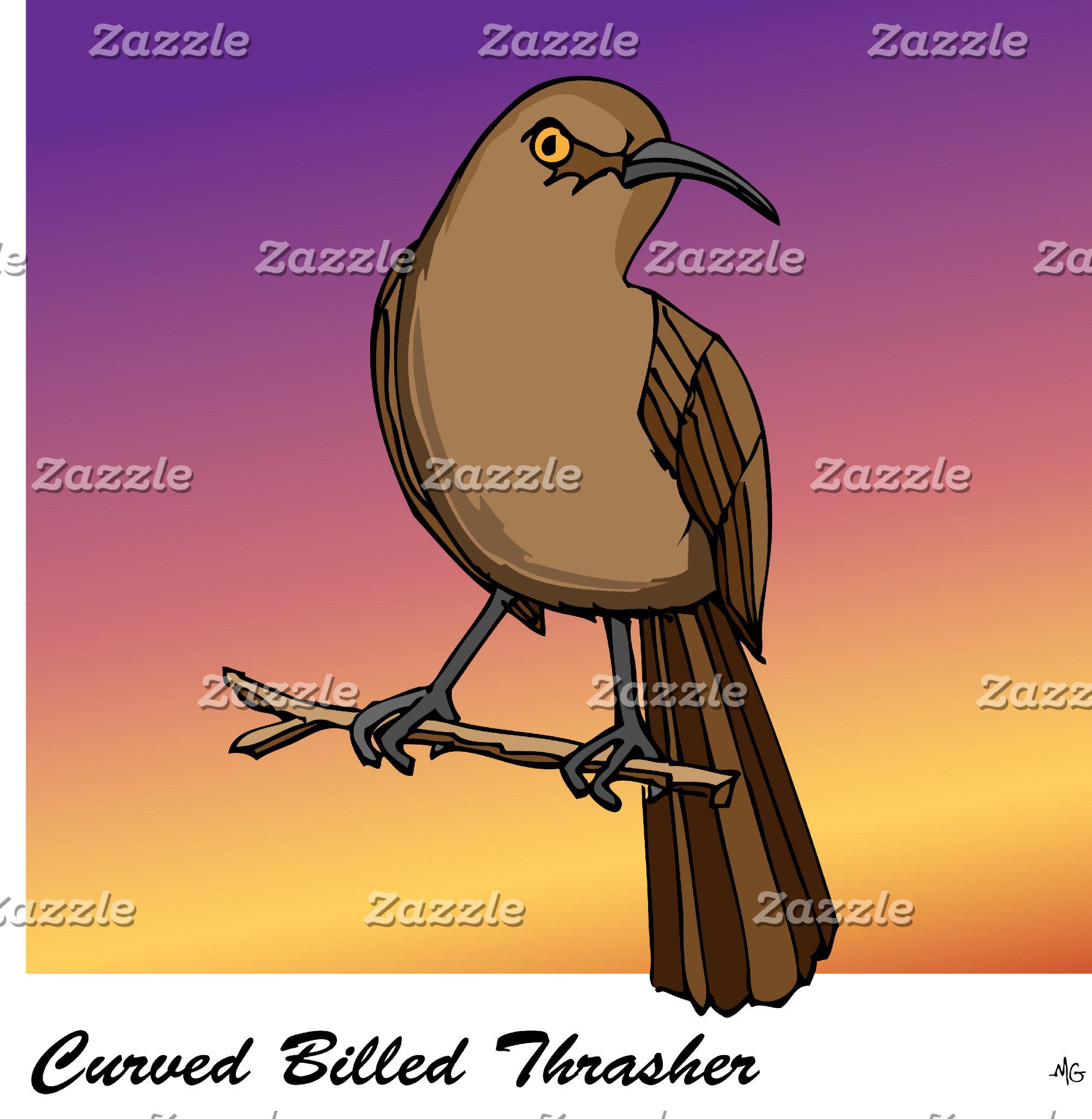 CURVED BILLED THRASHER rev.2.0