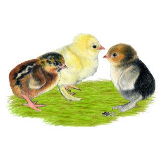 Baby Chick Trio