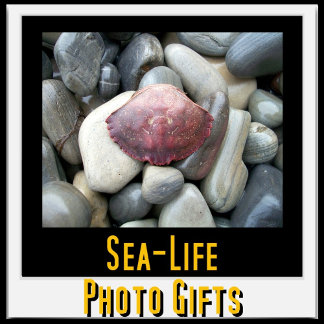Sea-Life Photo Gifts