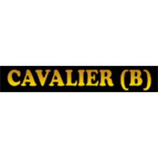 Cavalier King Charles Spaniel - Blenheim