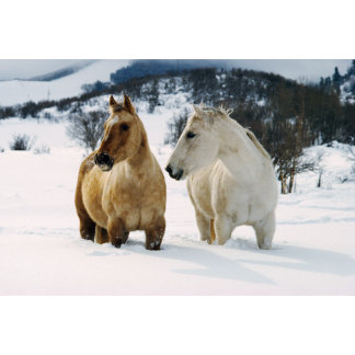 """horses standing in snow poster print"""