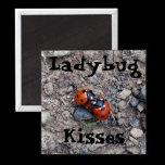 ladybug_kisses_magnet-p147553767455934321t5os_210.