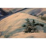 Pines&Snow.jpg.JPG