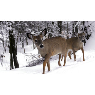 Deer Akers