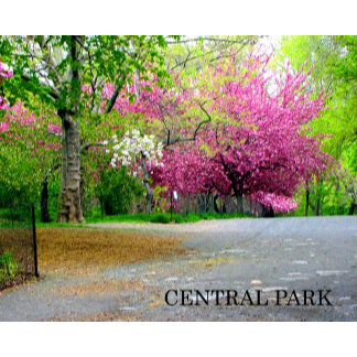 NYC-CENTRAL PARK