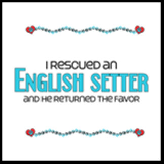 I Rescued an English Setter (Male Dog)