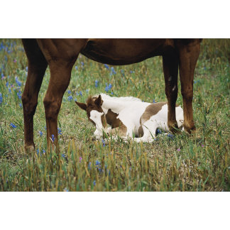Close-up of Horse and Baby Colt