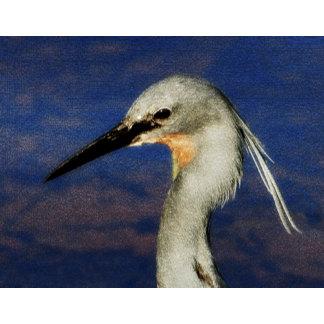 ~ Egret