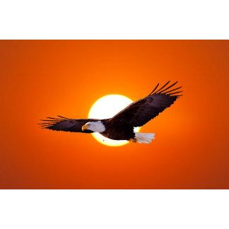 * Eagles