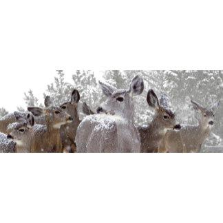 Deer in Snow Hayward