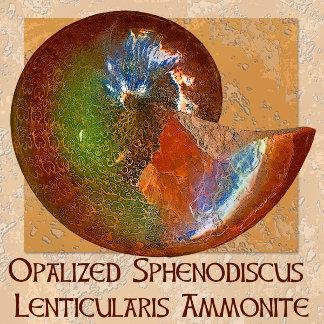 Opalized Sphenodiscus Lenticularis Ammonite