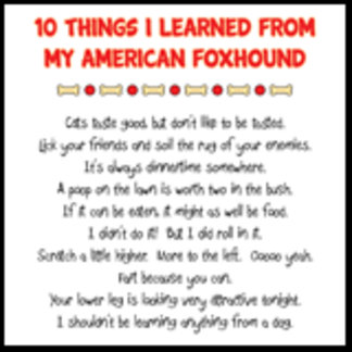 10 Things I Learned From My American Foxhound Joke