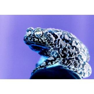 Frog photo inverted blue black
