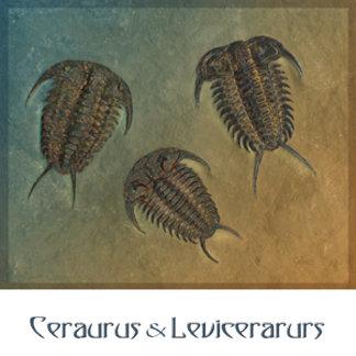 Ceraurus and Leviceraurus