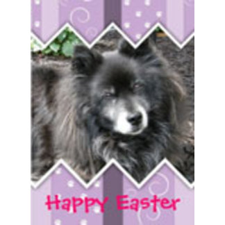 Easter/Passover for Pet Owners