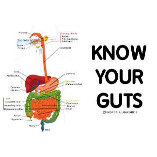 Know Your Guts (Digestive System Anatomical Humor)
