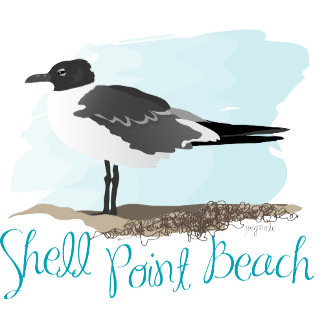 Shell Point Beach Seagull
