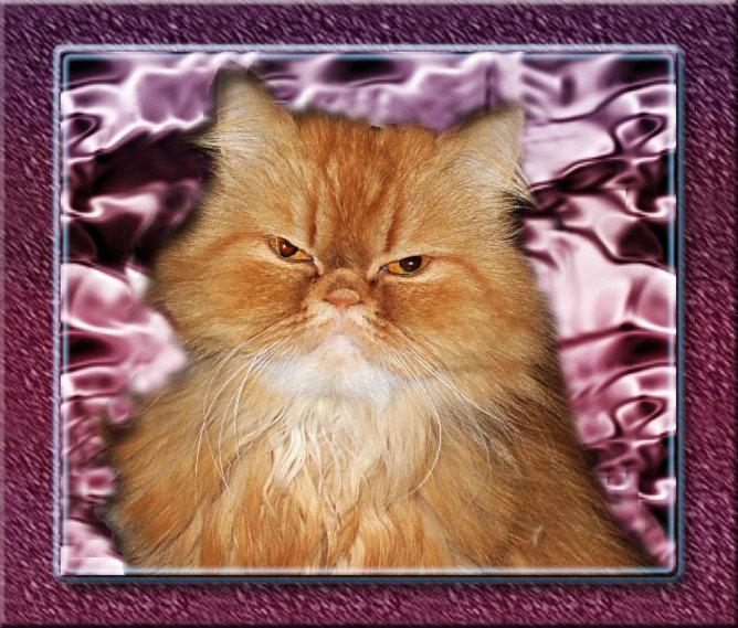 """""""Persian Cats"""""""
