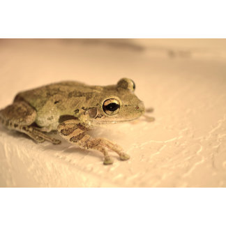 tree frog sepia looking right animal image