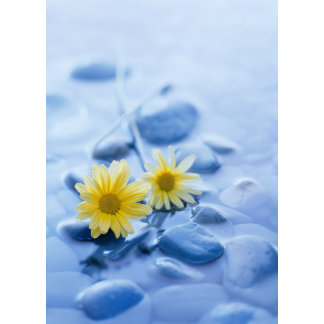 """""""daisies-on stones w/water poster print"""""""
