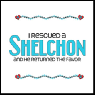 I Rescued a Shelchon (Male Dog)