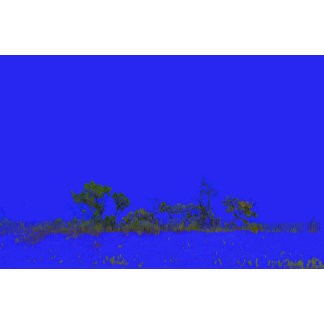 blue back tree sketch style