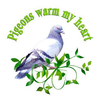 Pigeons warm my Heart