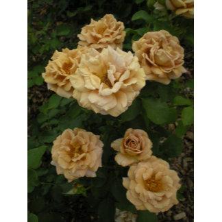 Sepia Rose Designs
