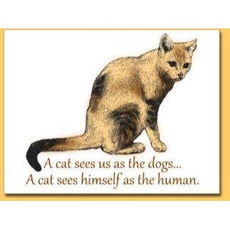 Cat Perceptions