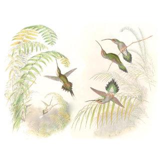 Hummingbirds, Vintage Hummingbirds!