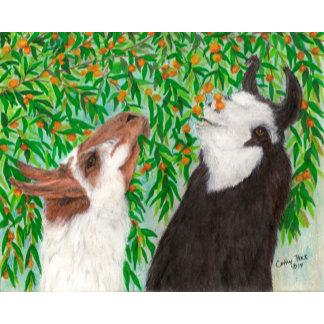 Camelids - Llama Art