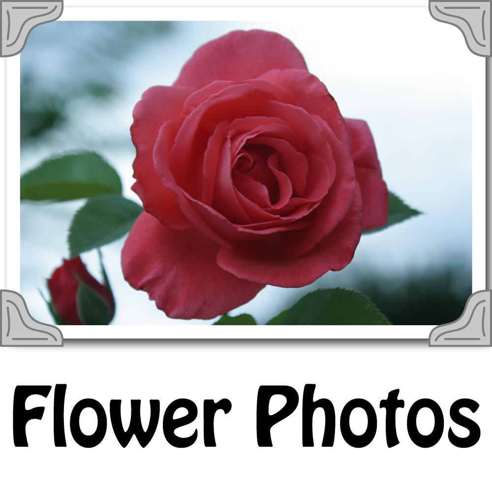 Flower_Photos