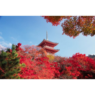 Asia, Japan, Kyoto. Autumn Colour