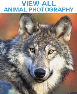 Wild and Domestic Animal Photo Image Gift Products