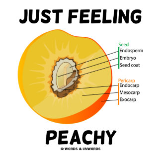 Just Feeling Peachy (Food For Thought)